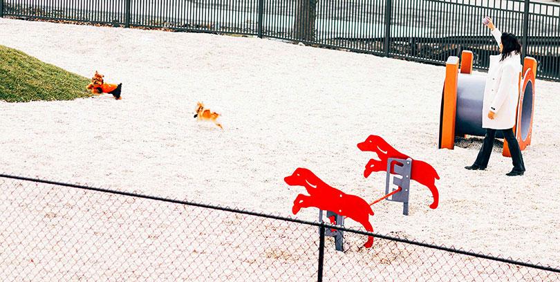 The Curb Dog Playground