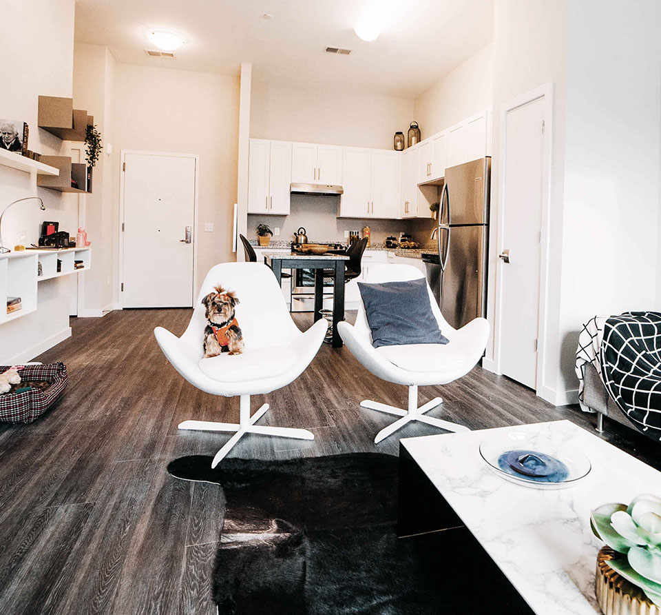 luxury normal apartments with hardwood floors pet friendly